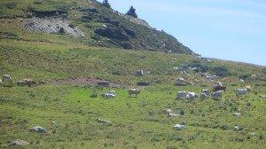 Col  de la Peyre